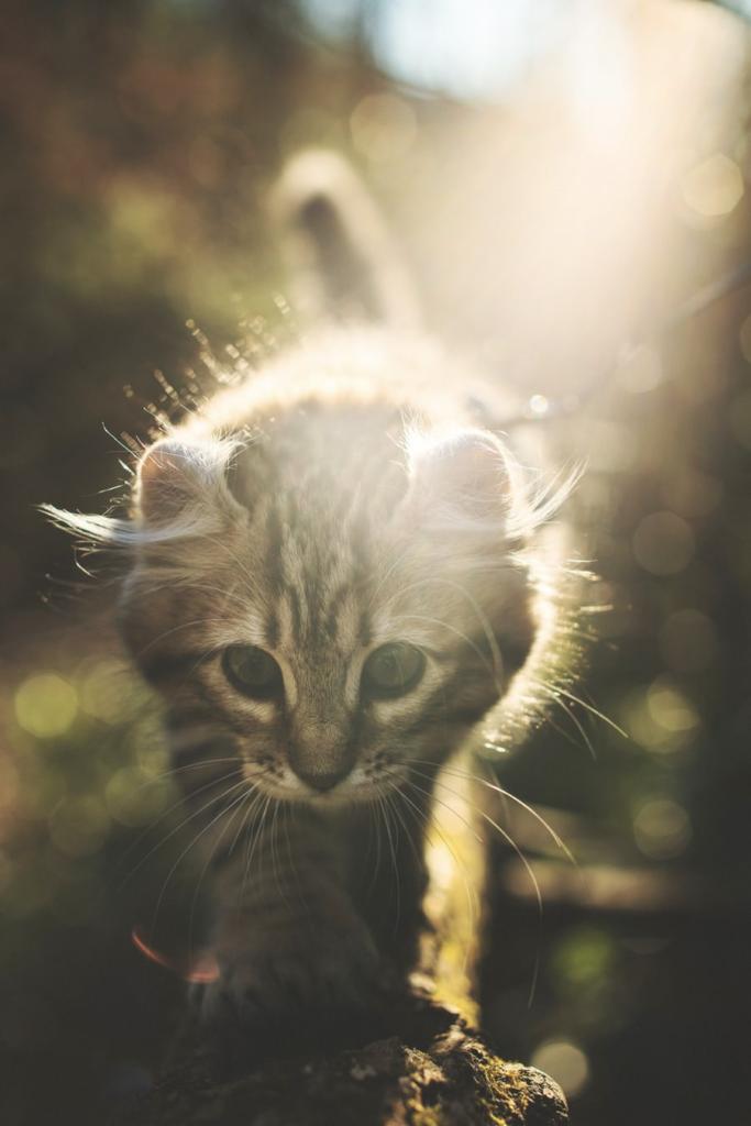 kat i kattepension